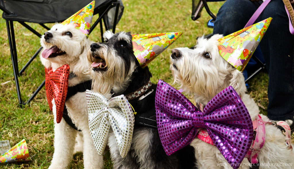 Dogs wearing party hats